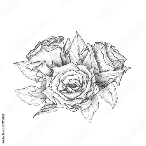 Hand Drawn Roses With Leaves Bouquet Vintage Etching Sketch