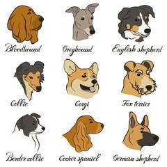 Bloodhound, collie, cocker spaniel, border collie, corgi, english shepherd, german shepherd, greyhound, shepherd, fox terrier vector dog breed set. FCI hound, terrier, sheepdogs and cattledogs.