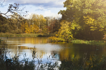Forest lake in autumn. Calm nature background