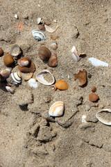 Muschelsammlung im Sand am Strand von Breskens