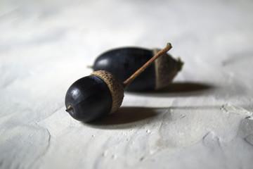 Dark blue acorns, close up.