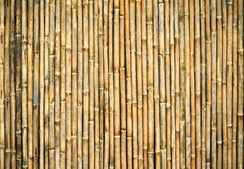 Dry bamboo wall background : Closeup