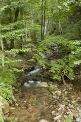 Little river in the forest near Saint Nicolas waterfall in Vosges France