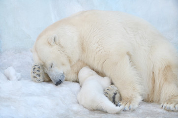 Медведица с медвежонком спят