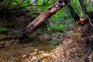 A forest stream and a fallen tree. Dolginsky ravine, Obninsk, Russia