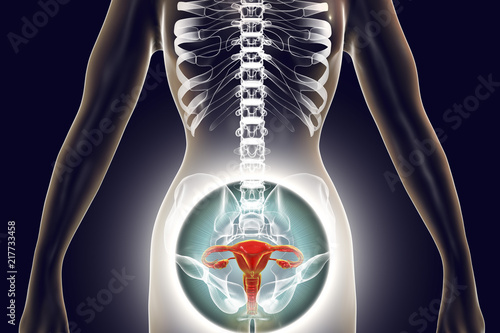 Anatomy Of Female Reproductive System 3d Illustration Female