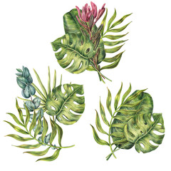 Set of three compositions of tropical palms leaves, monstera and protea flower, colored pencil illustration isolated on white background. Hand drawn floral compositions of palm leaves, protea flowers