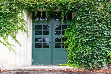 Doorway with ivy
