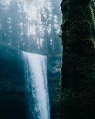 Waterfall and mossy tree trunk