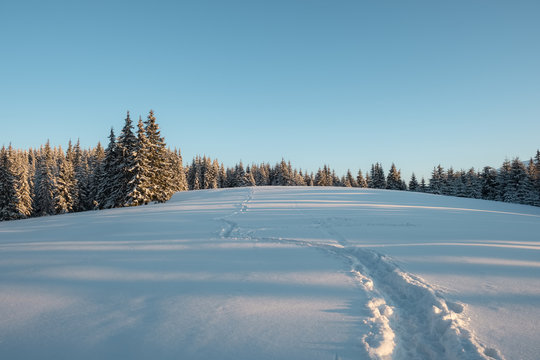 Winter lndscape of a mountain forest covered with snow at sunset.