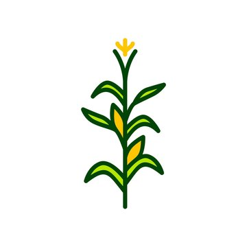 corn tree vector icon illustration
