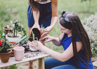 Female friends potting plants on table at yard