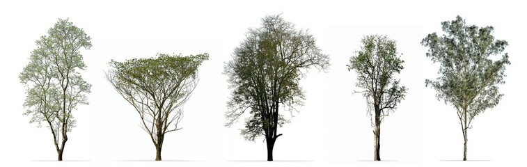 Wall Mural - Collection of trees isolated on white background