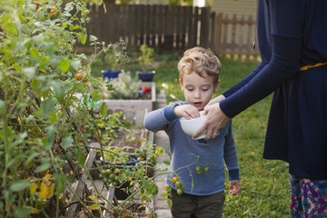 Midsection of mother holding bowl while son picking tomatoes in garden