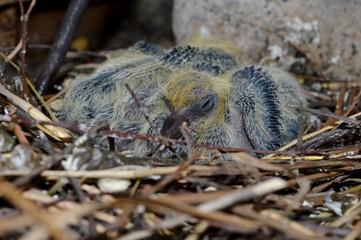 little bird in the nest