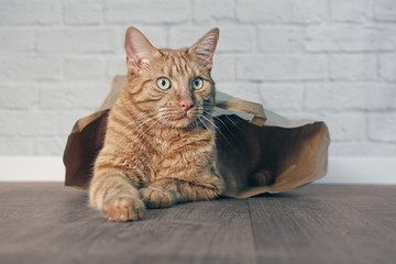 Cute ginger cat lying in a paper bag and looking sideways.