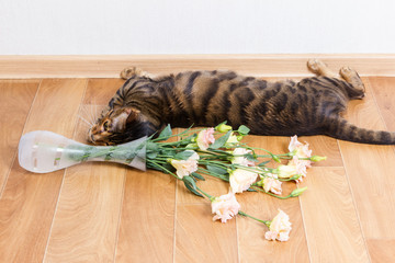 Cat breed toyger dropped glass vase of flowers on floor.