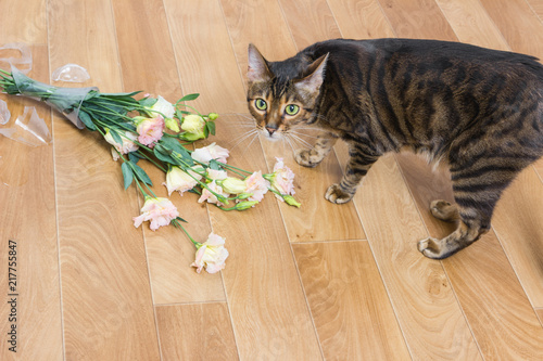 Cat Breed Toyger Dropped And Broken Glass Vase Of Flowers Stock