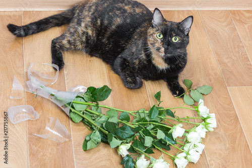 Domestic Cat Dropped And Broken Glass Vase Of Flowers Stock Photo