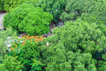 Bird eye view, green park with big green trees and red flowers in Thailand.