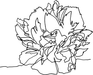 Peony flower close-up, minimalist illustration