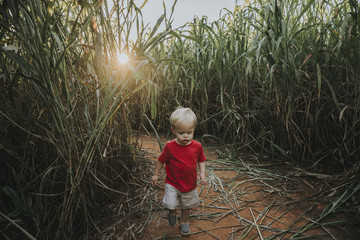 High angle view of baby boy walking on field amidst crops at farm during sunset