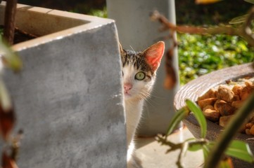 Mintsie the cat