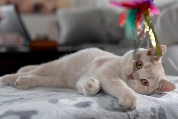 kitten spielt