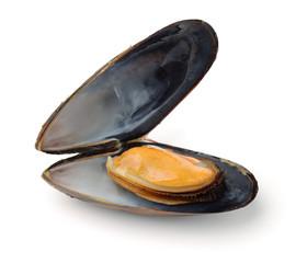 Single boiled mussel