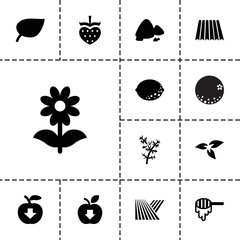 Collection of 13 organic filled icons
