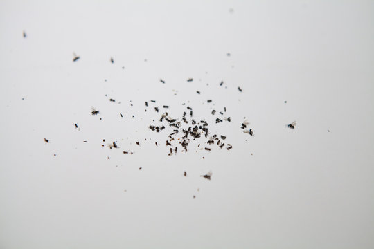 Swarm of dead flying ants. Though ants usually pose no real danger and problem to humans nor become aggressive pests, but can still be annoying and cause property damage which require home improvement