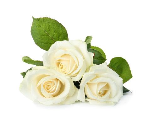 Beautiful fresh roses on white background. Funeral symbol