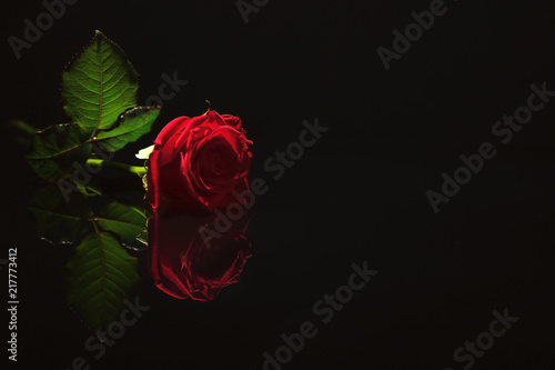 Beautiful Red Rose On Black Background Funeral Symbol Photo Libre