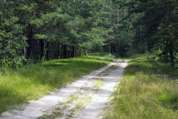 Forest road in a pine forest, Sunny summer day. Walk in the woods.