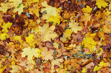 Autumn fallen leaves on the ground in the park
