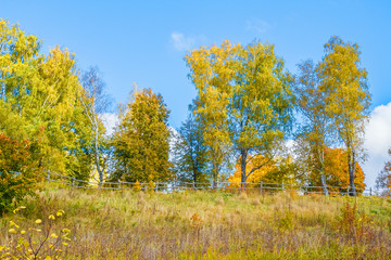 Autumn forest. Yellow and green trees against the blue sky