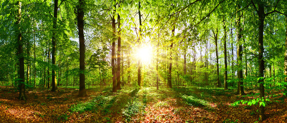 Poster Foret Beautiful forest in spring with bright sun shining through the trees