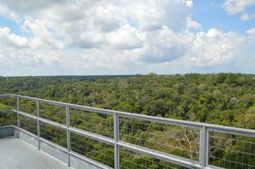 Vista Panorâmica Floresta Amazônica