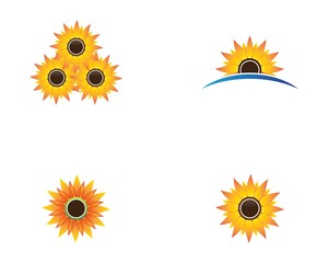Sunflower symbol illustration