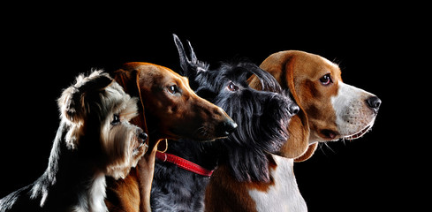 Group silhouette of dogs of different beeds
