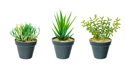 Set of small tree plant in black flower pot isolated on white background.