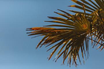 Grunge palm background.