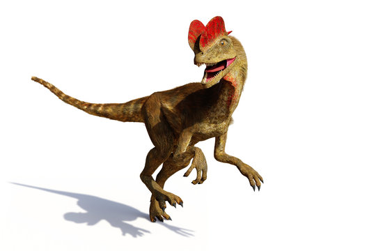 Dilophosaurus, theropod dinosaur from the Early Jurassic period (3d illustration isolated with shadow on white background)