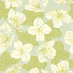 Seamless vector pattern with jasmine flowers for wrapping design. Blossom. Pastel drawing imitation.