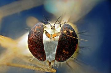 Kleine Fliege unter dem Mikroskop