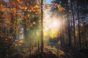 autumn forest bathed in sunlight