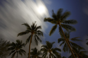 Tropical landscape in the night. Long exposure
