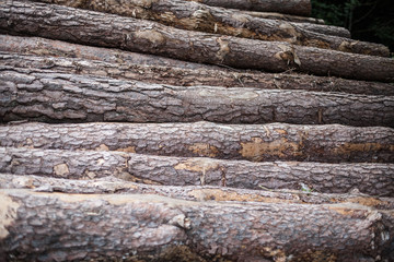 logs of wood in a forest with bark