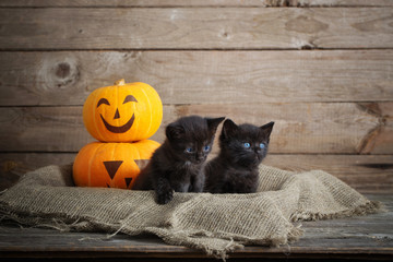 black little cat with halloween pumpkins