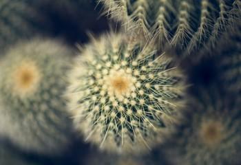 Close up image of a cactus